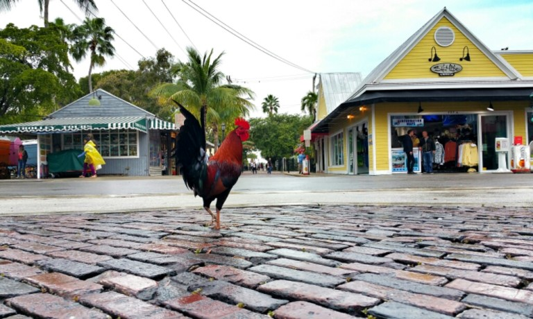 Why did the chicken cross the road? Because it was in Key West. (Day 4)